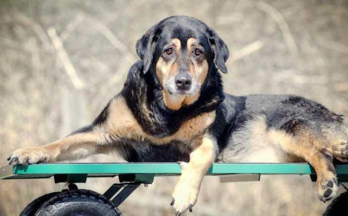 cani e adozioni