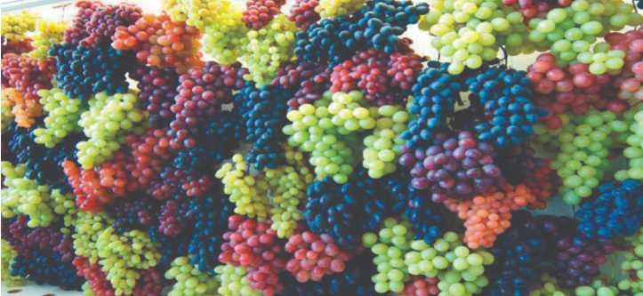 proprietà nutrizionali uva