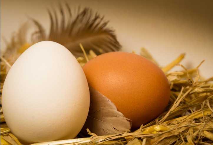 uova e qualità