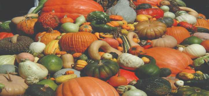 zucca e proprietà nutrizionali